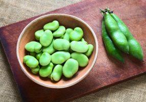 Fresh Fava Bean Purée