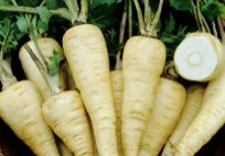 Whipped Parsnips